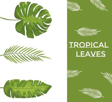 Exotische tropische Blätter. Monstera-Pflanzenblatt, Bananenpflanzen und grüne Tropen-Palmblätter isoliertes Set