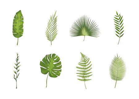 Hojas tropicales exóticas. hoja de la planta monstera, plantas de banano y hojas de palmera tropicales verdes conjunto aislado