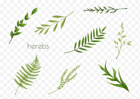 Collection of green leaves. Highly detailed colorful plant collection.