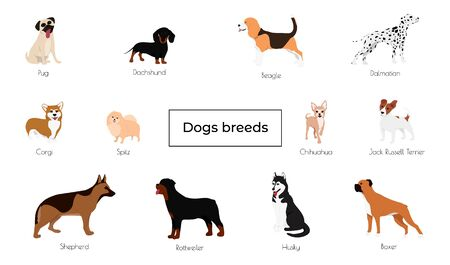 Different type of vector cartoon dogs. Vector illustration 矢量图像