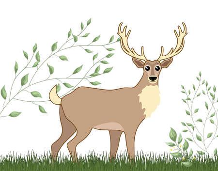 Cute woodland forest animal deer. Vector illustration