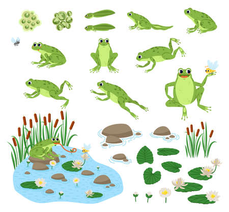Set of cartoon hungry frog sad, smile, resting and hunting. Happy frog sit and jump clip art, different pose, with pond, plants, dragonfly. Vettoriali