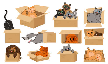Cats in boxes sticker set. Animal above and behind, near and under the box. Isolated vector educational illustration in cartoon style
