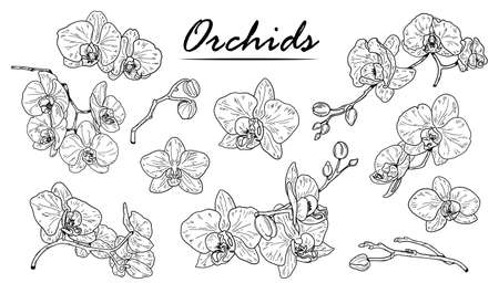 Orchids sketch. Hand drawn outline orchid. Black and white vector illustration isolated on white Иллюстрация