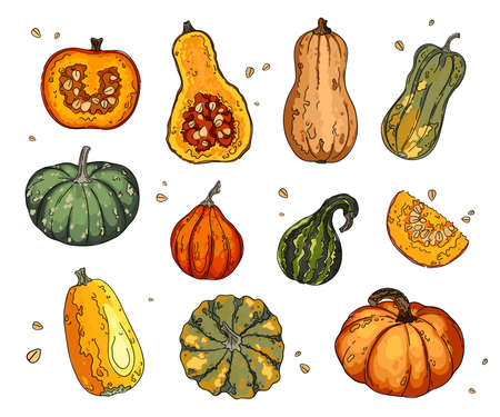 Different types of pumpkins and gourds. Autumn collection of pumpkin set elements design with different vegetables pumpkins oriental bittersweet