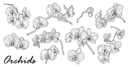 Drawing of orchid set. Cute hand drawn flower vector illustration in black outline and white plane on white background.