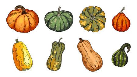 Pumpkins, butternut squash and gourd. Thanksgiving pictogram collection farm harvest, closeup squash, vegetable. Иллюстрация