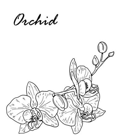 Vector. Orchid flower. Floral botanical flower. Hand drawn black outline bouquet with orchid