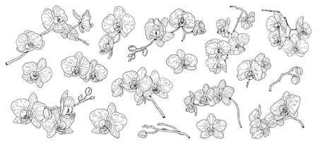 Set of isolated orchid. Orchids sketch. Hand drawn outline converted to vector. Isolated