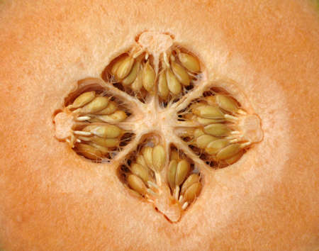 four chambers: Cantaloupe cut in half with seeds exposed