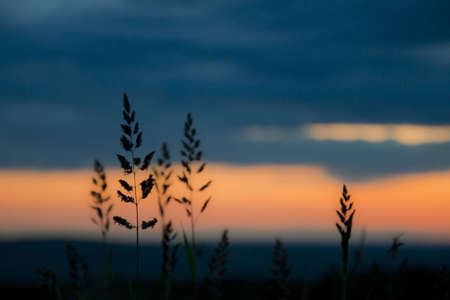Grass silhoutted against sunset sky Stock Photo