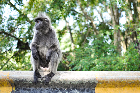 Monkey sitting and looking photo