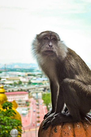 Single Monkey Starring photo