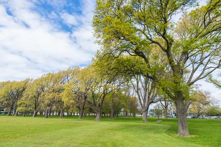 Greenery grass field