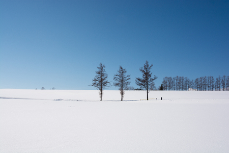 Snow and larch, biei-Cho