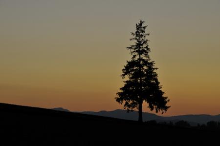 Sunset sky and pine trees, Biei