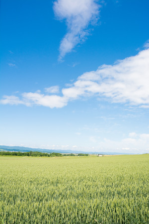 Field of Mugi