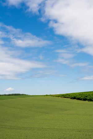 Mugi green field and blue sky
