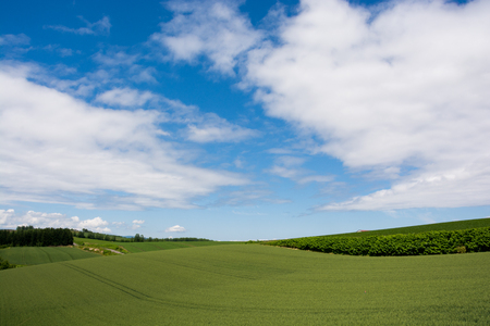 Wheat and barley fields of green and blue sky 写真素材 - 119813775