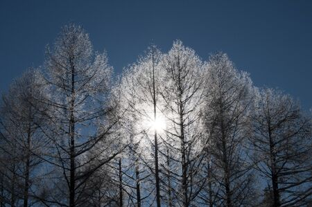 Shining trees in the cold morning