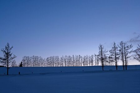 Winter sunset sky and larch trees in Biei 스톡 콘텐츠