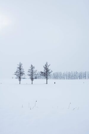 Larch on the snowy field