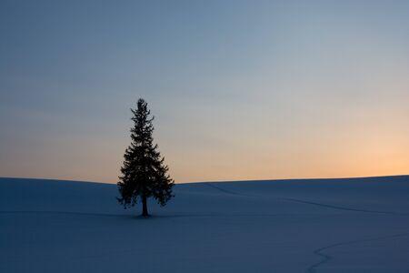 Pine tree standing on hill at sunset in winter inBiei Banco de Imagens - 138288302