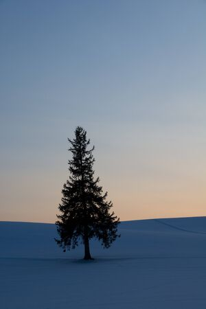 Pine tree standing on hill at sunset in winter inBiei Banco de Imagens - 138283888