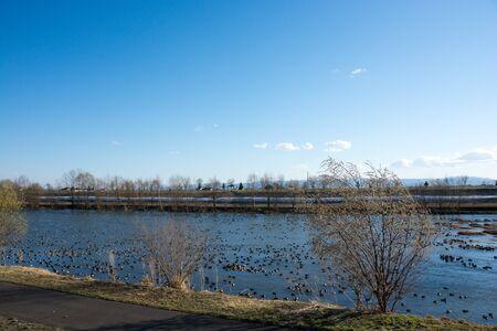 Spring river where water birds flock