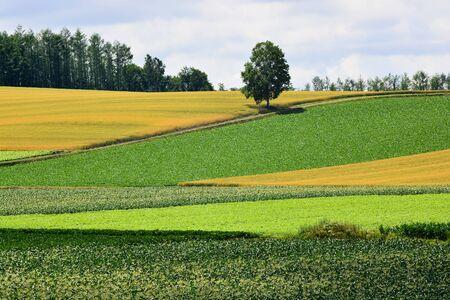 Patchwork-like summer upland