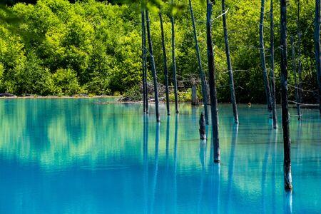 Blue pond in early summer in Biei