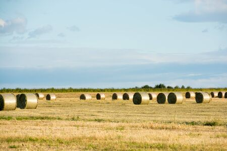 Hay rolls in the pasture after cutting Banco de Imagens