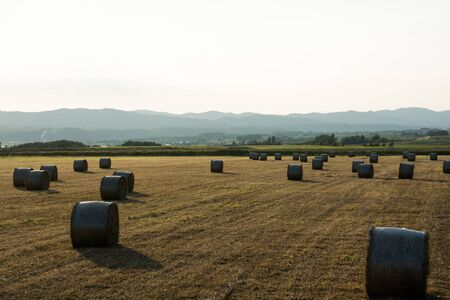 Pasture field after mowing at evening with lots hay bales