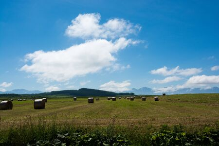Hay bales in summer field with the blue sky