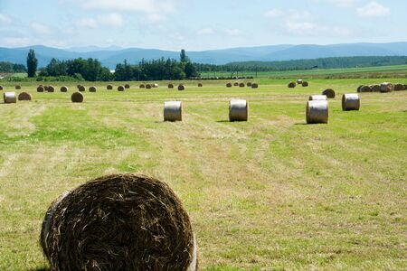 Hay bale in the pasture after mowing