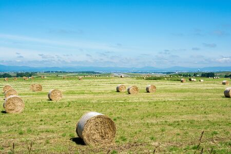 Summer green meadow with hay bales