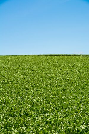 Green fields in summer hills with the blue sky