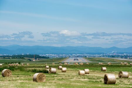 Summer pasture in front of the airfield