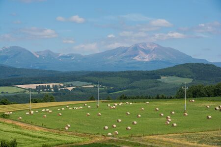 Grass field and mountain range
