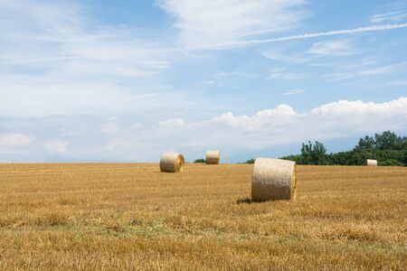 Wheat rolls in the field after mowing Banco de Imagens