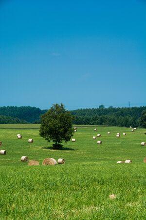 Green meadow with hay bales Banco de Imagens