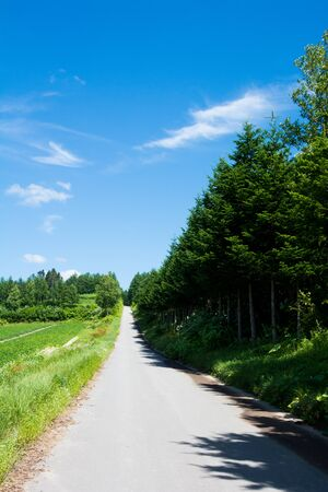 Summer rural straight road with the blue sky