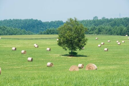 Hay bales and green meadow field