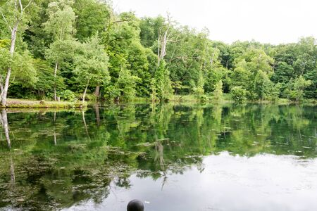 Fresh green forest and lake