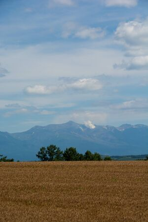 Golden wheat field with the mountain range