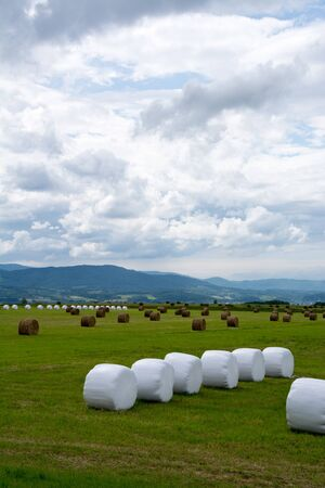 Pasture field lined with grass rolls wrapped in white vinyl