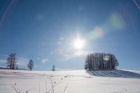 Larch forest on a snowy hill and the sun