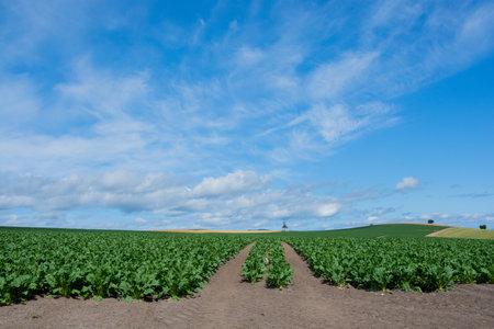 Green vegetable fields in summer hills