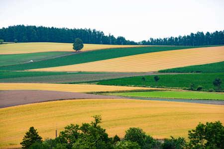 Summer hill upland like patchwork