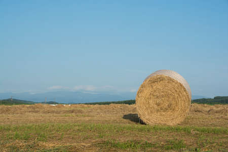 Hay bales with the blue sky in summer